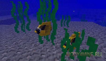 Множество видов мелких рыбок