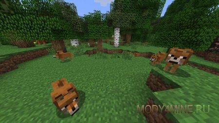 Собакены захватили поляну