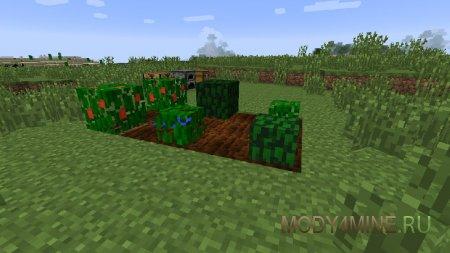 Растения на разных стадиях роста