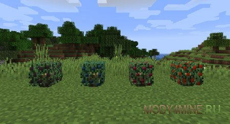 Кусты с ягодами