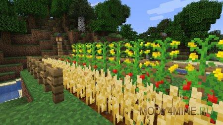 Овес, помидоры и кукуруза