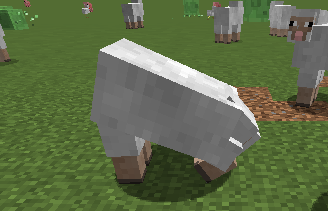 Овца ест траву