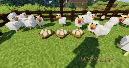 Курицы откладывают яйца в гнезда